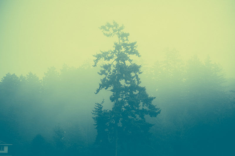 Effected Foggy Forest by Paul Jarvis
